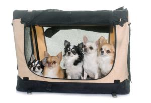 Hunde Transportbox faltbar aus Stoff