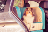 Dogstyler® Series 55 für die Rückbank Cadillac Cyan S - L Hundebox Kunstleder Hund im Auto