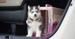 Hundetransportbox Welpen
