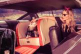 Dogstyler® Series 55 für die Rückbank Rockabilly Red S - L Hundebox Kunstleder Hund im Auto